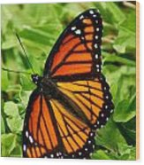 Monarch Butterfly Wood Print by Carol Toepke