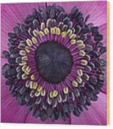 Anemone Wood Print by Mark Johnson