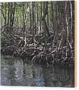 Mangrove Forest In Los Haitises National Park Dominican Republic Wood Print by Andrei Filippov