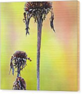 Wilted Flower  Wood Print by Toppart Sweden