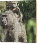 A Monkey And Its Baby Sitting On Her Wood Print by Diane Levit