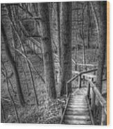 A Walk Through The Woods Wood Print by Scott Norris