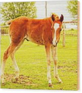 A Young Foal Wood Print by Jeff Swan