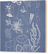 Acetabularia Caraibica And Chondria Intricata Wood Print by Aged Pixel