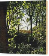 Across The Way Wood Print by Julie Dant