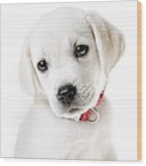 Adorable Yellow Lab Puppy Wood Print by Diane Diederich