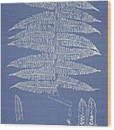 Alsophila Ornata Wood Print by Aged Pixel