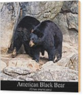 American Black Bear  Wood Print by Chris Flees