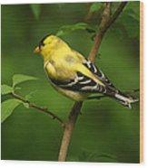 American Gold Finch Wood Print by Sandy Keeton