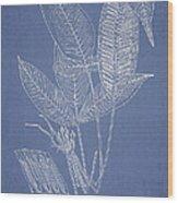 Anisogonium Lineolatum Wood Print by Aged Pixel