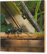Ants Adventure 2 Wood Print by Bob Orsillo