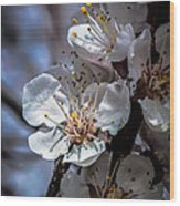 Apple Blossoms Wood Print by Robert Bales