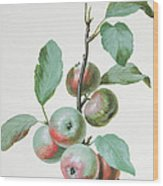Apples Wood Print by Pierre Joseph Redoute