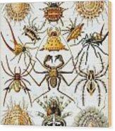 Arachnida Wood Print by Georgia Fowler