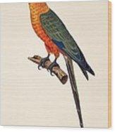 Aratinga Chrysocephalus  Wood Print by German School