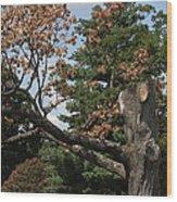 Arlington National Cemetery - 121242 Wood Print by DC Photographer