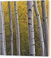 Aspen Light 2 Wood Print by Dave Dilli