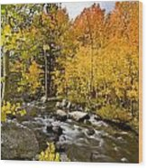 Aspens At Bishop Creek Wood Print by Cat Connor