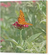 At Rest - Gulf Fritillary Butterfly Wood Print by Kim Hojnacki