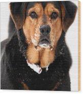 Attentive Labrador Dog Wood Print by Christina Rollo