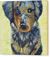 Australian Shepherd Puppy Wood Print by Janine Riley