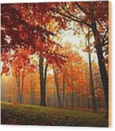 Autumn Canopy Wood Print by Terri Gostola