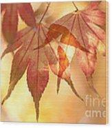 Autumn Glow Wood Print by Anne Gilbert