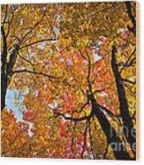 Autumn Maple Trees Wood Print by Elena Elisseeva