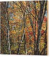 Autumn Trees Wood Print by Elena Elisseeva