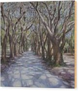 Avenue Of The Oaks Wood Print by Henry David Potwin