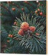 Baby Pinecones Wood Print by Julie Dant