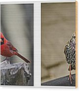 Backyard Bird Series Wood Print by Heather Applegate