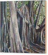 Banyan Trees Wood Print by Karol Wyckoff