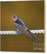 Barn Swallow Wood Print by Todd Bielby