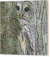 Barred Owl Peek A Boo Wood Print by Jennie Marie Schell