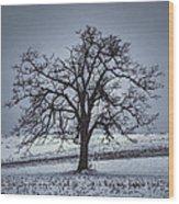 Barren Winter Scene With Tree Wood Print by Dan Friend