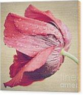 Beautiful Flower Wood Print by Diana Kraleva