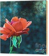 Beautiful Red Rose Wood Print by Robert Bales