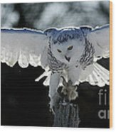 Beauty In Motion- Snowy Owl Landing Wood Print by Inspired Nature Photography Fine Art Photography