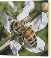 Bee Wood Print by Steven  Taylor