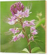 Beeweed . . .with Ant Wood Print by  Feva  Fotos