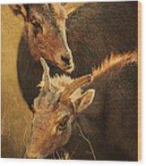 Bighorn Sheep Of The Arkansas River  Wood Print by Priscilla Burgers