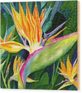 Bird-of-paradise Wood Print by Janis Grau