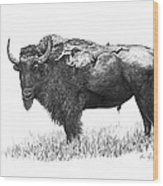 Bison Wood Print by Aaron Spong