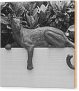 Black And White Cat Wood Print by Rob Hans