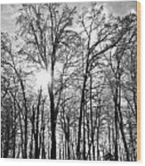 Black And White Forest Wood Print by Dawdy Imagery