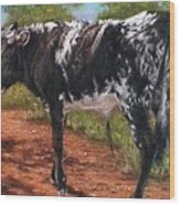 Black And White Shorthorn Steer Wood Print by Denise Horne-Kaplan