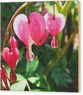 Bleeding Heart Wood Print by Brittany H
