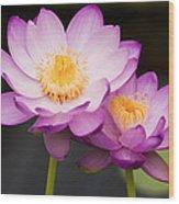 Blooming Violet  Wood Print by Naushad  Waheed