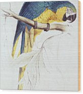 Blue And Yellow Macaw Wood Print by Edward Lear